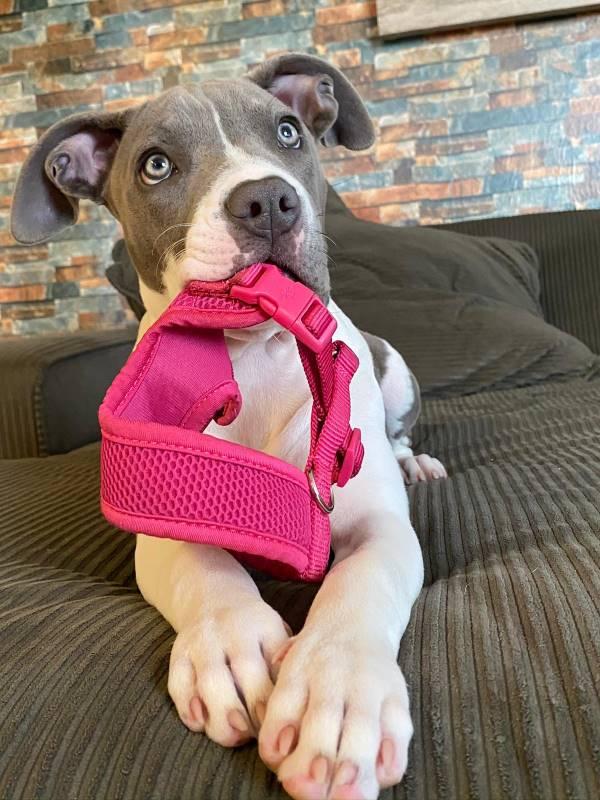 Laila Zarour is always ready for a walk