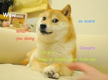 Original Doge Meme. By Atsuko Sato.  This copyrighted image is used under non-free rationale as stated on: https://en.wikipedia.org/wiki/File:Original_Doge_meme.jpg